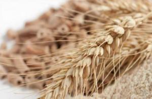 10 lý do nên ăn thực phẩm có chứa yến mạch